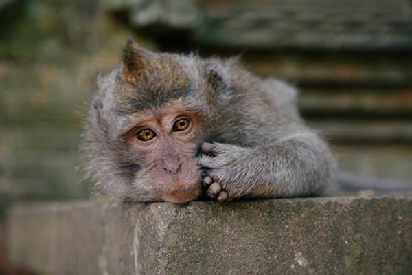 balitranquilitytours-monkey forest